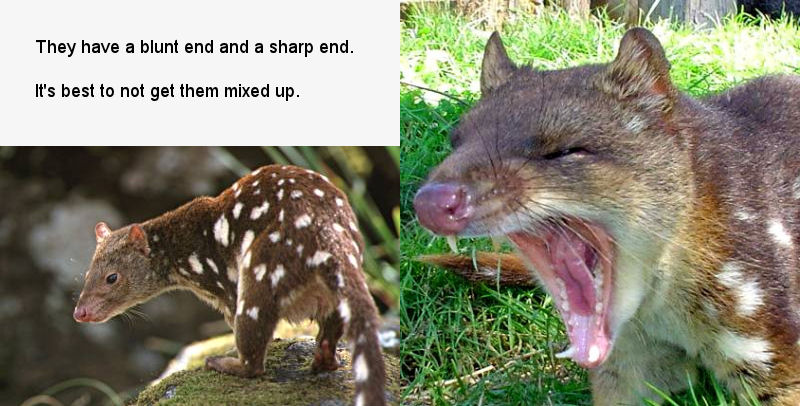 http://www.yvonneclaireadams.com/HostedStuff/Quoll2.jpg
